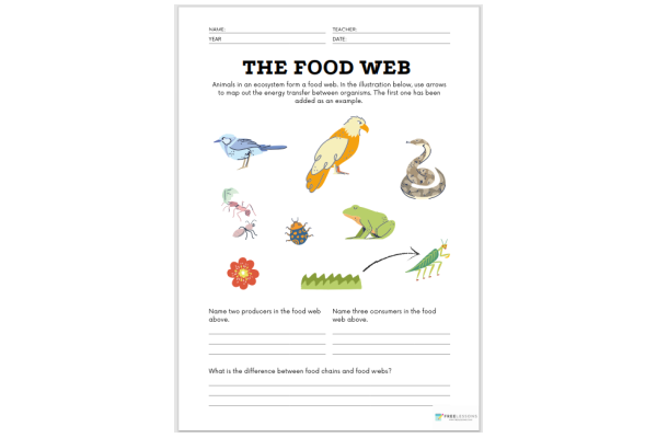 The Food Web (Key Stage 1)