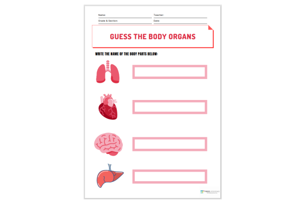Guess The Body Organs (Key Stage 1)