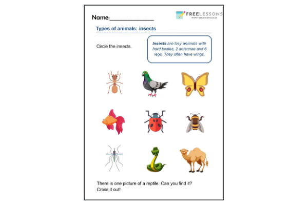 Insects (Key Stage 1)