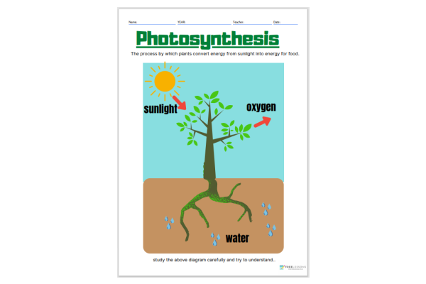 Photosynthesis (Key Stage 1)