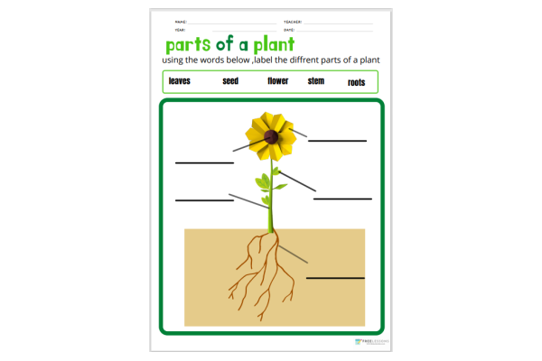 Parts Of A Plant (Key Stage 1)