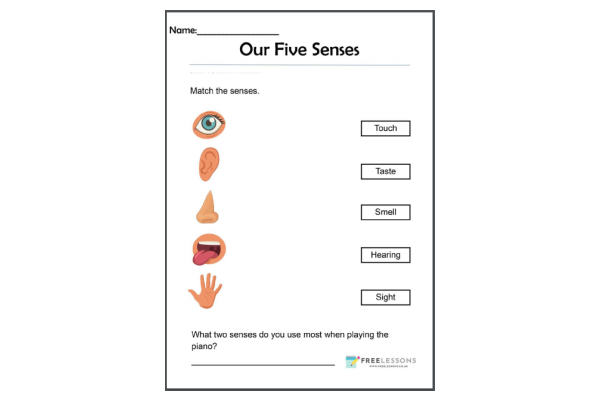 Our Five Senses (Key Stage 1)
